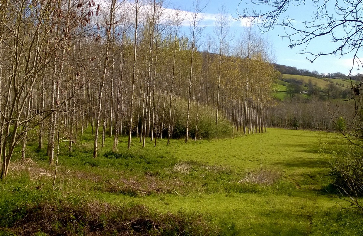 Woodland management plan woods Christon