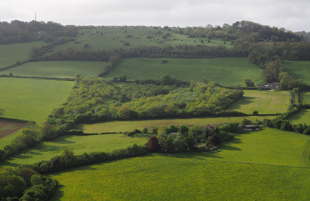 Aerial view of The Retreat community woodland
